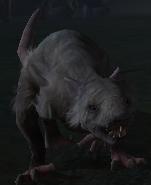 Wolfsratte