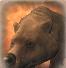 Bear-portrait