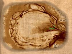 Baumhöhle Map