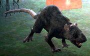 Riesen Wolfsratte