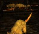 Rat-loup