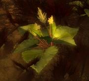 Gulmond pflanze01