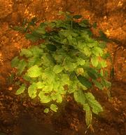 Belmart pflanze01