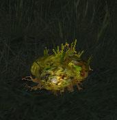 Olginwurz Pflanze