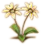 Plant Lore