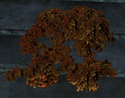 Feuermoos pflanze01