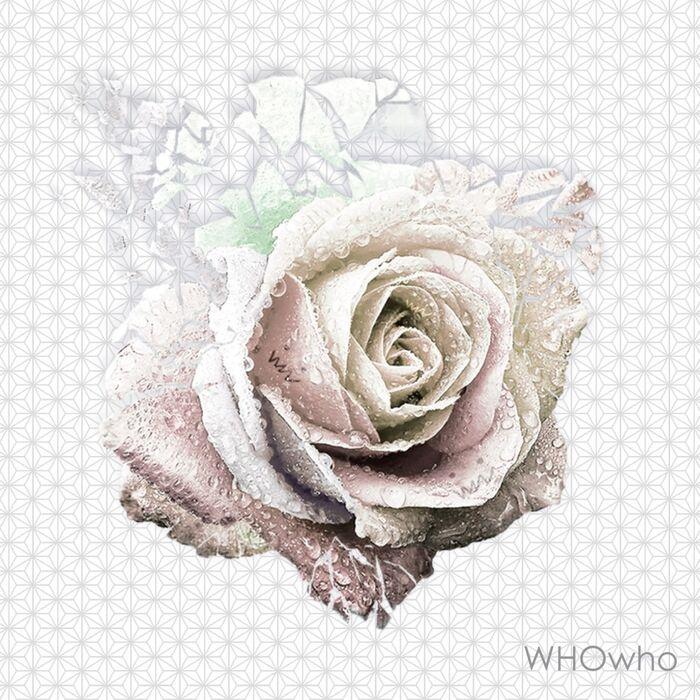 WW OY15