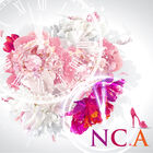 NC.A - Cinderella Time