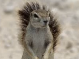 Live Action Squirrel With Big Balls