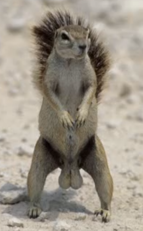 latest?cb=20150622175937 live action squirrel with big balls drawn together wiki fandom