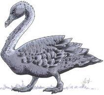 Gloom Swan