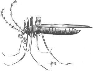 Mosquito, Monstrous, Quagmire