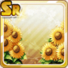 Flower Bed of Sunflowers