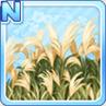Pampas Grass Awaiting Moonlight Type 1