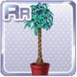 Pachira Plant Red