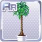 Pachira Plant White