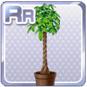 Pachira Plant Brown