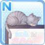SRN11