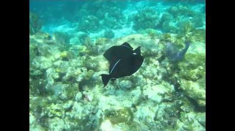 Snorkeling in Grand Cayman 2011