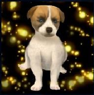 Puppy Ally