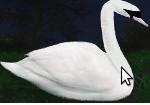 File:Swan.png