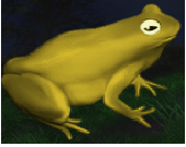 Large Toad