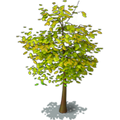 Res tree 6