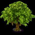 Camphor tree small.png