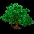 Camphor tree.png