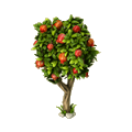 Pomegranate tree.png