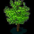 Res tree 5
