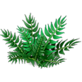 Res fern 1.png