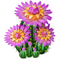 Res blooming cactus 3.png