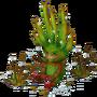 Aloe deco
