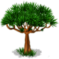 Res drago tree 4.png