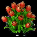 Tulips plant