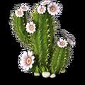 Res cactus 2.png