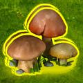 Autumn mushrooms.png