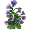 Res lungwort 2.png