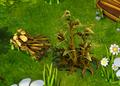Brushwood resource.png