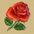 Coll grateful flower