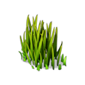Res grass 4.png