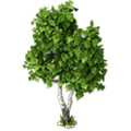 Res birch 1.png