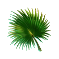 Fern leaf.png
