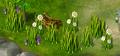 Grasses resource.png