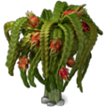 Res dragon fruit 1.png