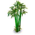 Bamboo thicket small.png