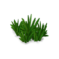 Res curative watergrass 3.png