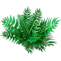 Res fern 2.png