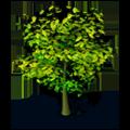 Res tree 7